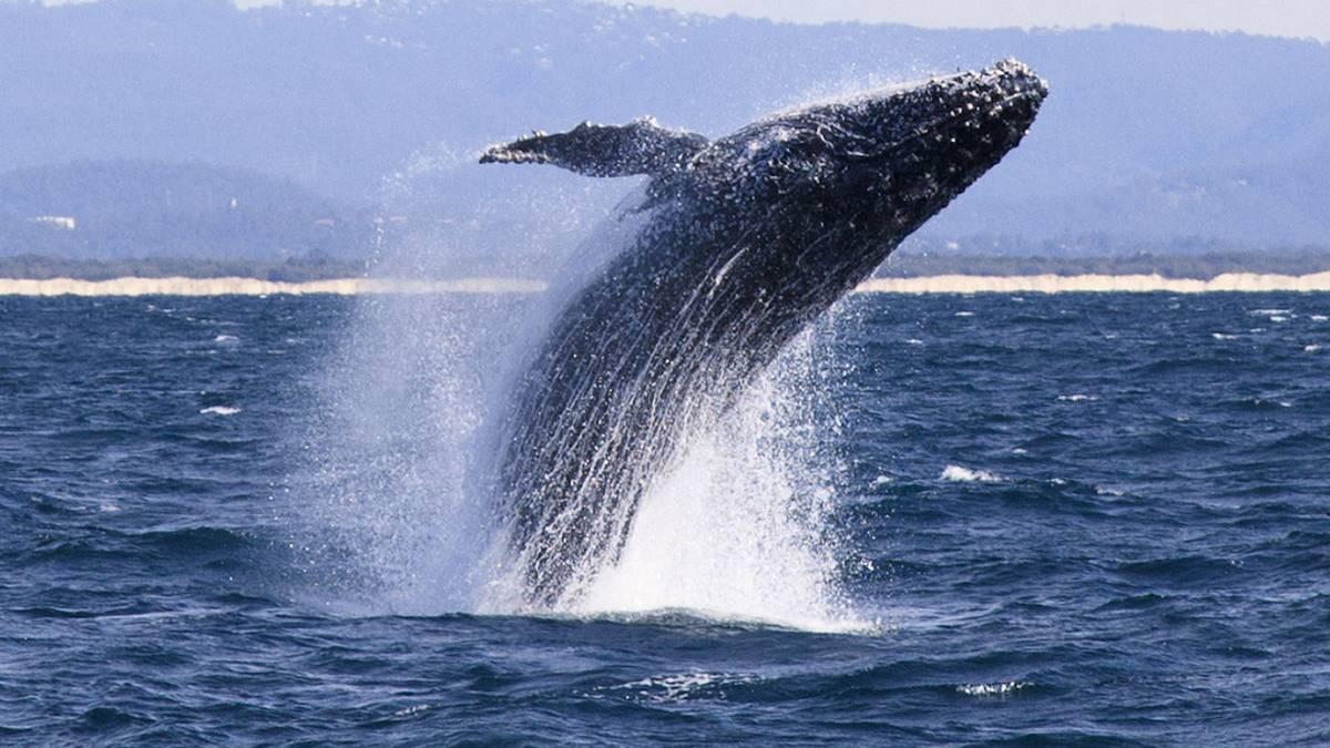 Una ballena en las costas de Acapulco? El viral que da esperanza ...